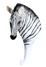Wandhaak zebra (Africa)